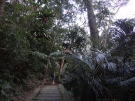2013-01-20 LalaShan Tree 110