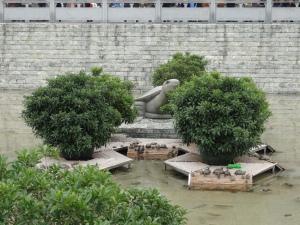 2013-02-17 Fonghuangshan 023
