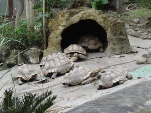 2013-11-16 Taipei Zoo 239