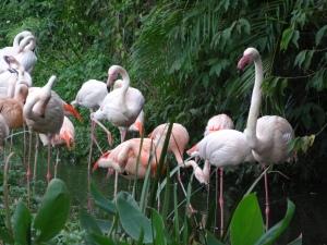 2013-11-16 Taipei Zoo hx30 003