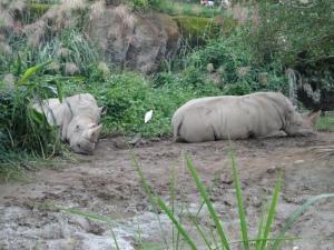 2013-11-16 Taipei Zoo hx30 051
