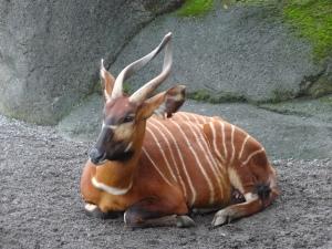 2013-11-16 Taipei Zoo hx30 059