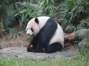 2013-11-16 Taipei Zoo hx30 115